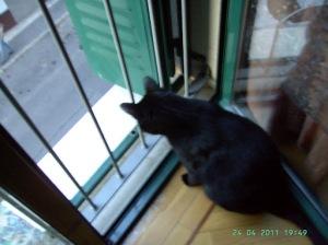 Los gatos que se asoman a las ventanas