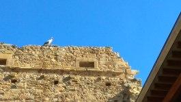 Cigüeñas de Moreruela