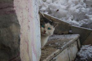gato, enfado, nieve