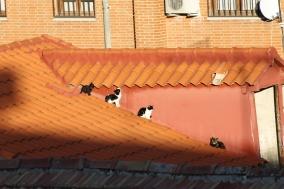 Gato-family al sol